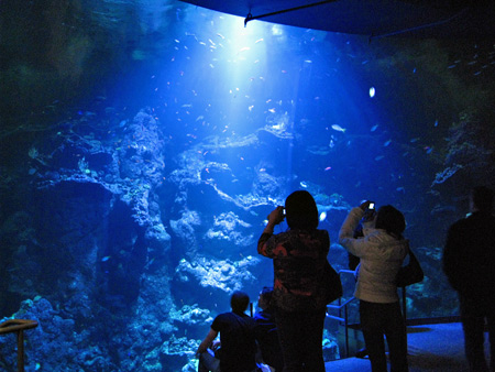 philippine-coral-reefs-2