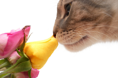 tabby-cat-smelling-roses