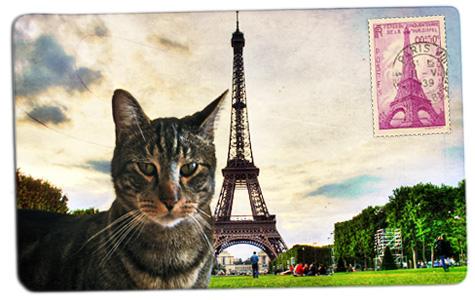 Tabs in Paris...