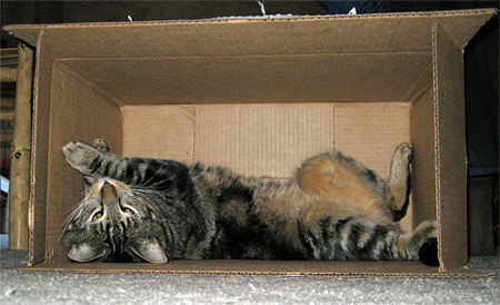 tabs-in-a-box