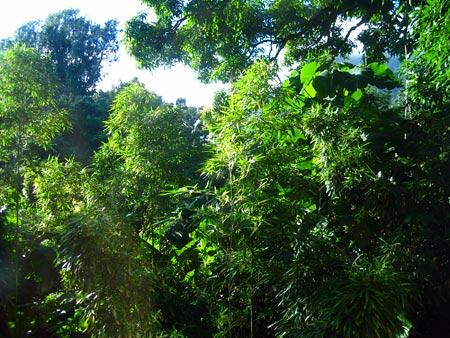 green-jungle-boogie
