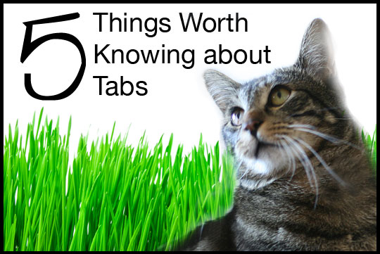 5 Things You Should Know about Tabs