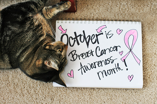 Tabs with his Breast Cancer Awareness Month sign