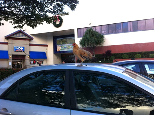 chicken on top of a car at the windward mall