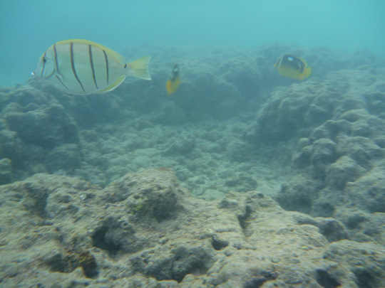 Hanauma Bay, Oahu, Hawaii - Snorkeling and more fishies