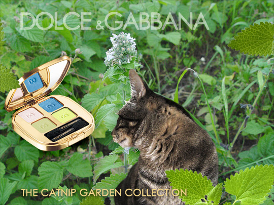 Tabs for the Dolce & Gabbana Catnip Garden Collection