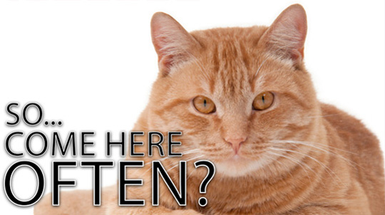 Cats are pickup artists...but you already knew that