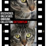 Tabs for the Smashbox Cats on Film Collection