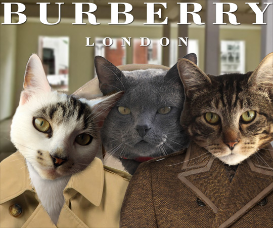 Tabs for Burberry Beauty Feline Fall Collection