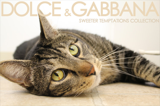 Tabs for Dolce and Gabbana Sweeter Temptations