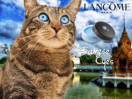 Tabs for Lancome Siamese Eyeshadow
