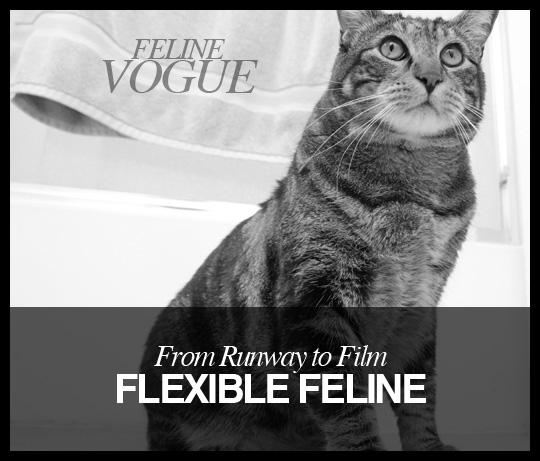 Feline Vogue