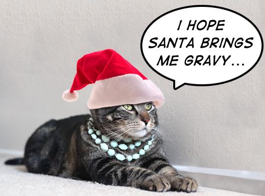 Tabs loves Santa