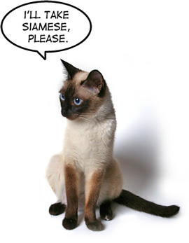 Siamese Please