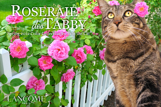 Tabs for Lancome Roseraie Des Tabby