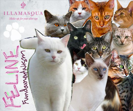 Tabs for Illamasqua Feline Fundamentalism