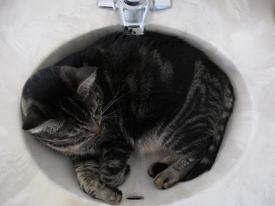 More kitty in the sink