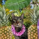 Tabs for Tarte Tabby Feline Fur Protector