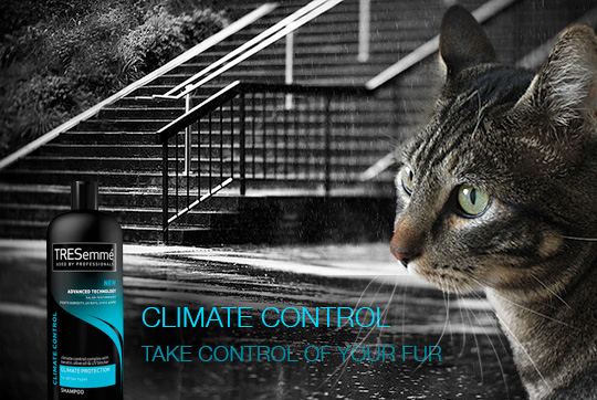 Tabs for Tresemme Climate Control