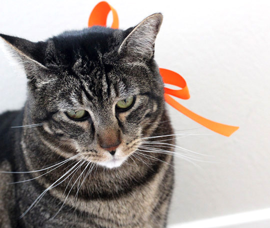 crankypants-tabs-orange-ribbon