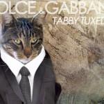 Tabs for the Dolce & Gabbana Tabby Tuxedo