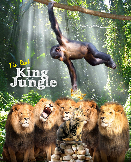 Tabs for the MAC The Real King of the Jungle Collection