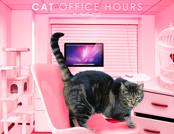 Tabs for the MAC Cat Office Hours Collection