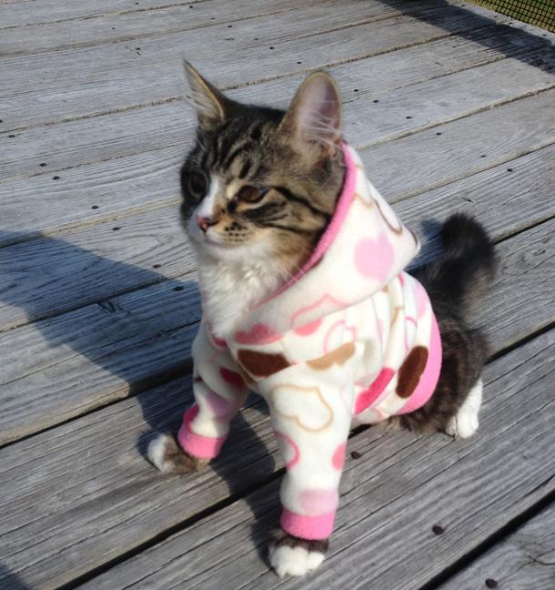 11 Custom Pink Tan and Brown Hearts Cat hoodie