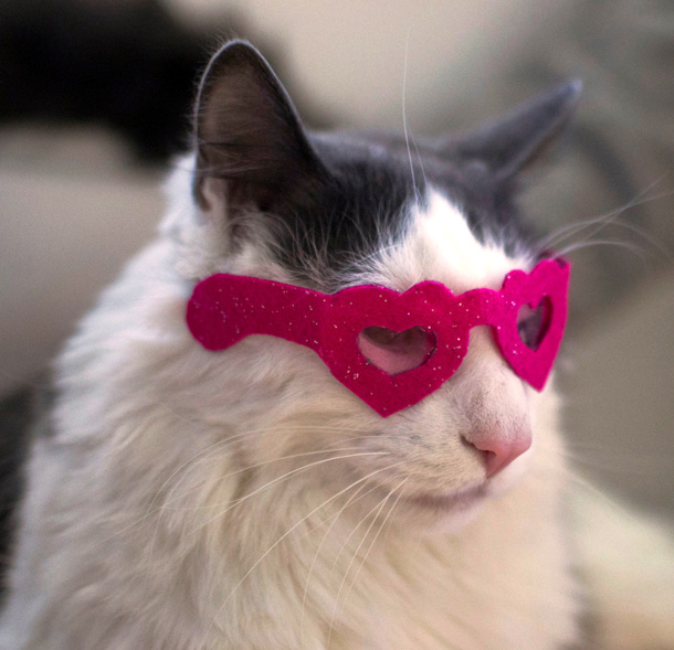 15 Heart Shaped Sunglasses for Cats