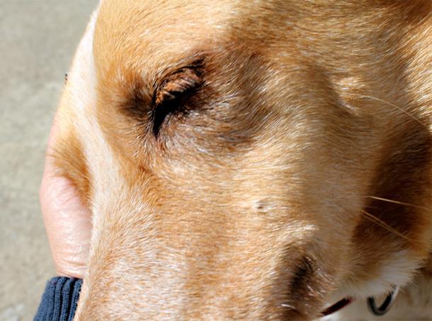 shauna puppy love