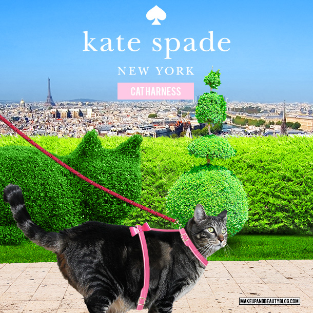 Tabs the Cat for the Kate Spade Cat Harness