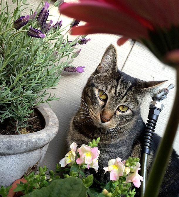 Tabs the Gardener