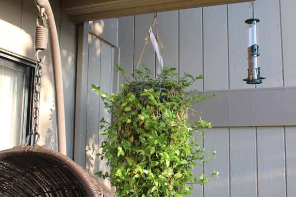 novato-april7-2014-deck-planter