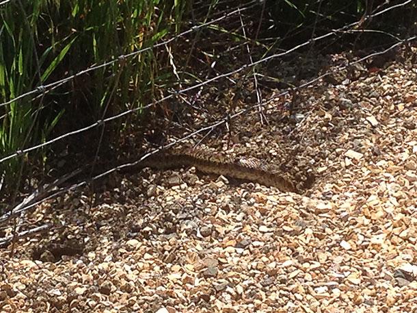 Snake!!!!