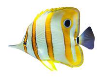 Cute fishy!