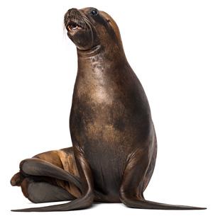 mac-alluring-aquatic-seal-1