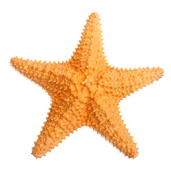 mac-alluring-aquatic-starfish