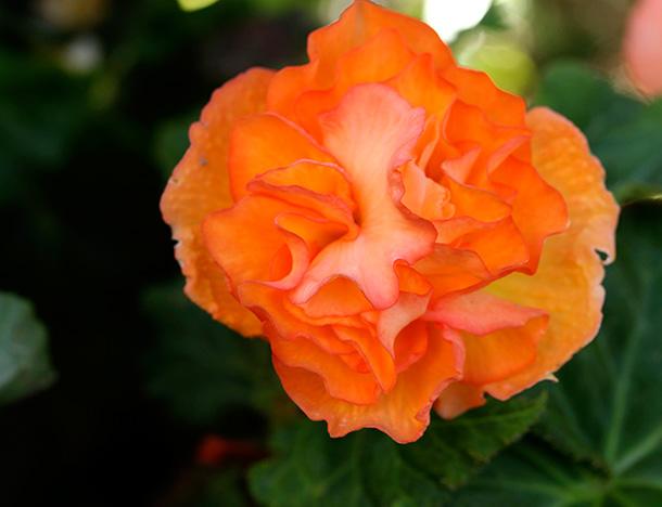 Orange Flower