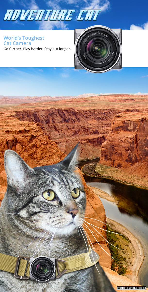 Tabs the Cat for the Adventure Cat Travel Camera
