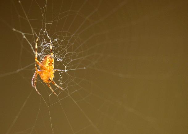 Charlotte the Spider