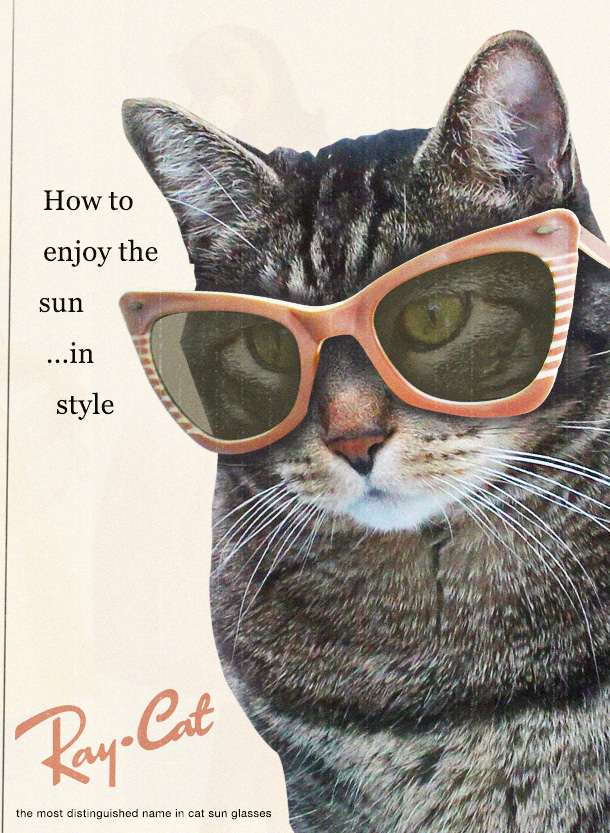 Tabs the Cat for Ray-Cat Sun Glasses
