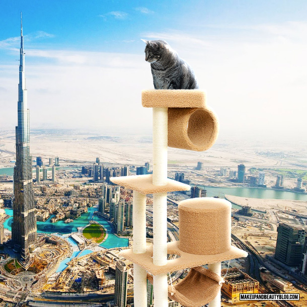 World's tallest cat tower