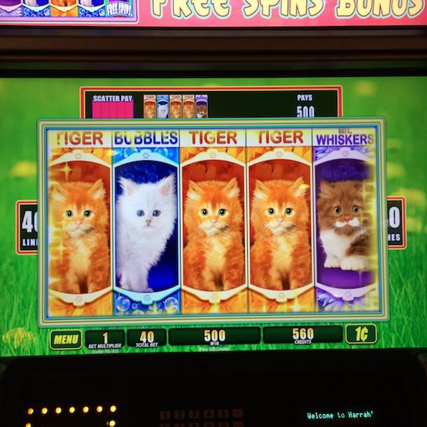 omg kittens game 9