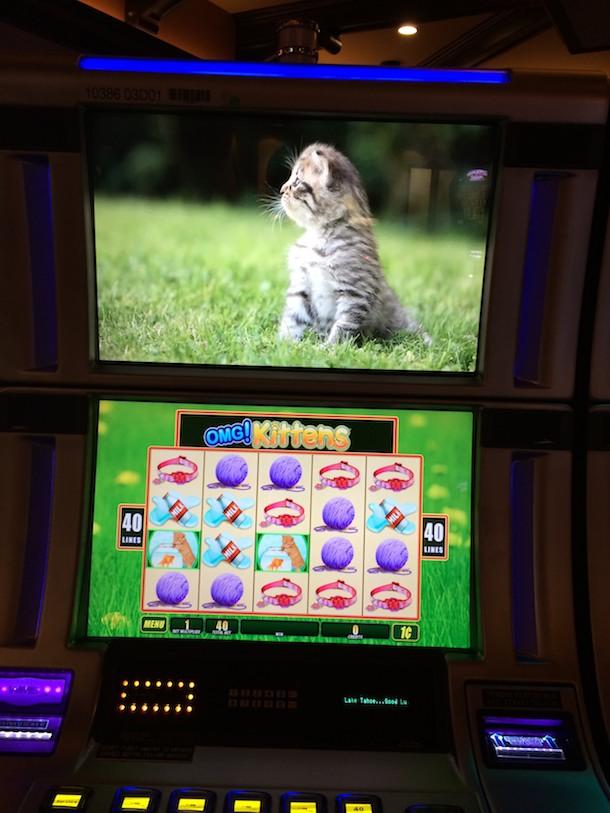 omg kittens game