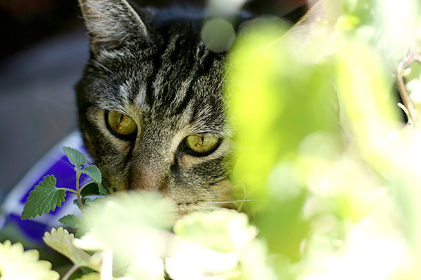 Tabs with his catnip plant (7)