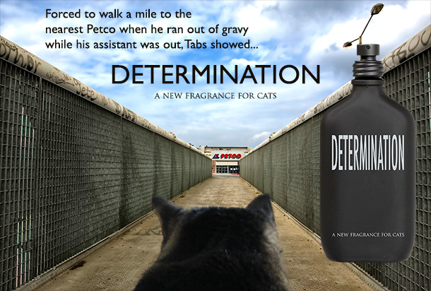 Tabs for Determination, a new fragrance for cats
