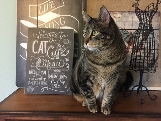 tabs-cat-cafe-610