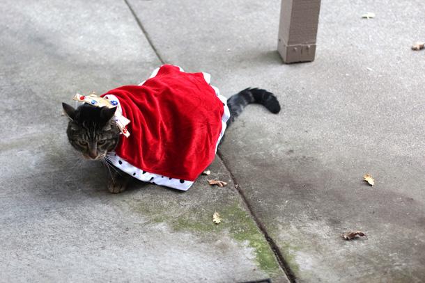 Do you like my costume? I'm King Tabby.