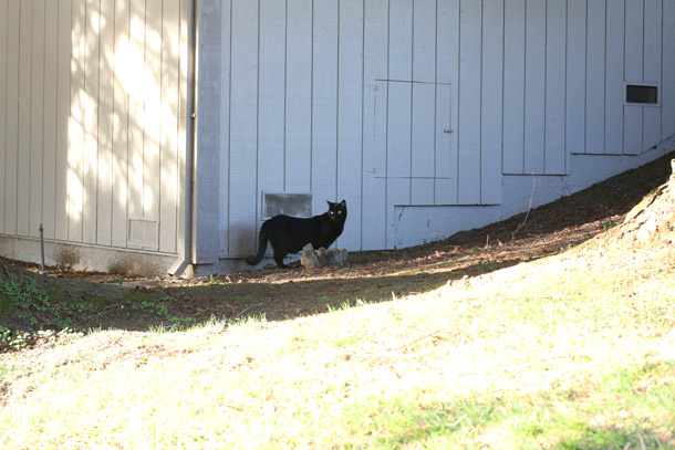 novato-black-cat-friday-13th-1