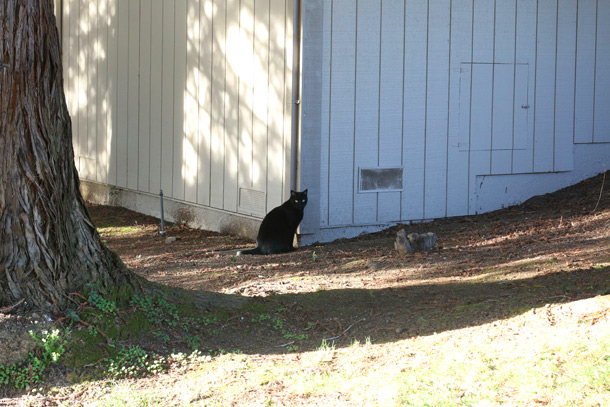 novato-black-cat-friday-13th-2